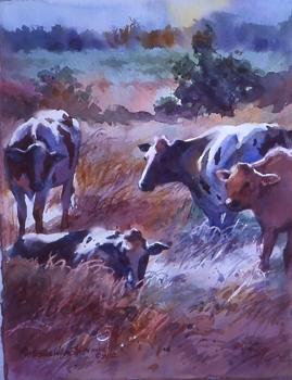 Cows Morning Light