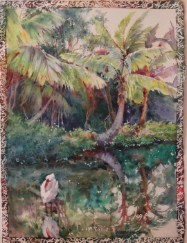Ibis in the Mangrove