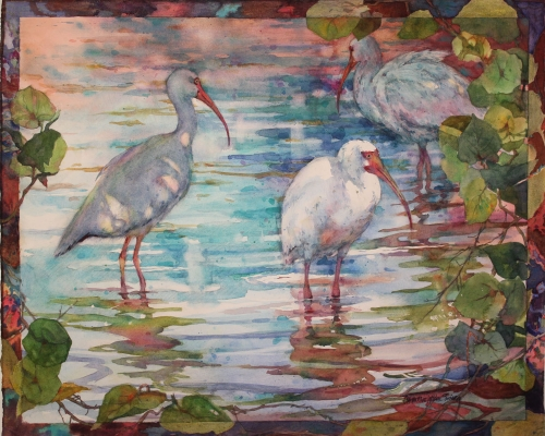 Ibis in the shallows